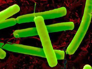 Как бороться с анаэробными бактериями