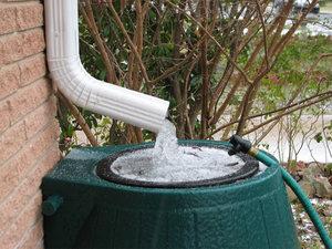 Сбор дождевой воды на даче поможет для полива и других целей.
