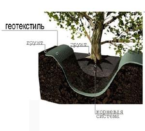 Геотекстиль в саду поможет ограничить рост корневой системы деревьев.