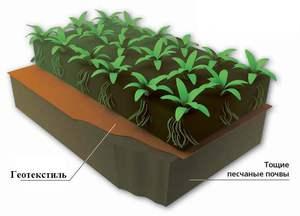 Геотекстильное полотно можно укладывать под клумбу или грядку для создания плодородной почвы.